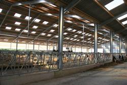 Un bâtiment d'élevage lumineux en journée grâce à l'installation d'un filet brise-vent sur la façade sud et à 12% de plaques translucides sur la toiture.
