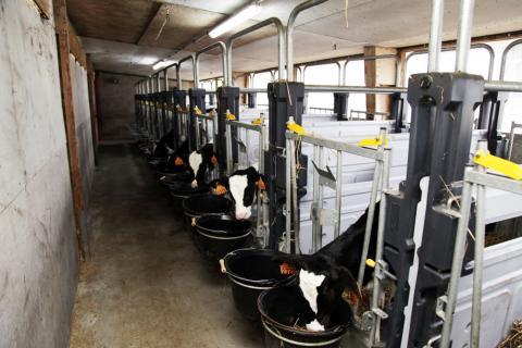 Cultivert rénovation d'une nurserie à veaux