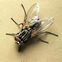 produit contre les mouches