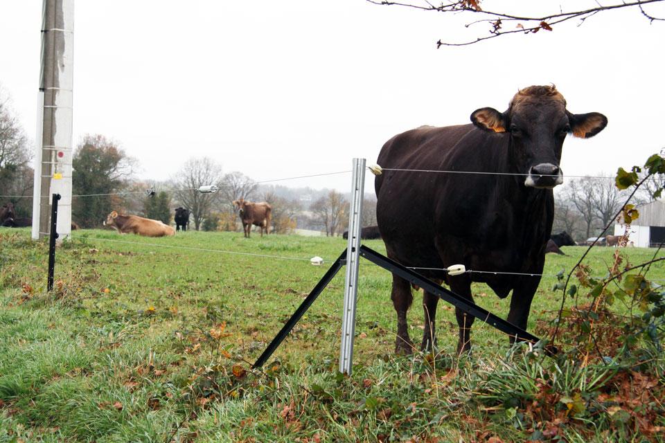 La clôture permanente, sûre et durable - Cultivert
