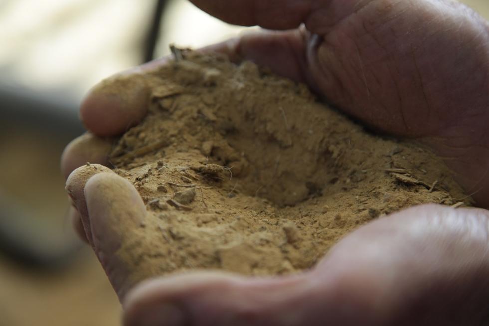 La dolomie du Poitou est un sable doux doté d'une grande capacité d'absorption de l'humidité, ce qui en fait une litière très agréable pour la vache.