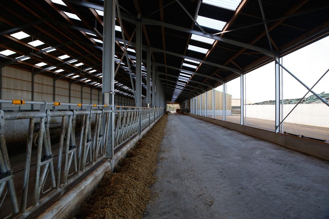Le nouveau bâtiment bovin compte 150 places de cornadis -Cultivert