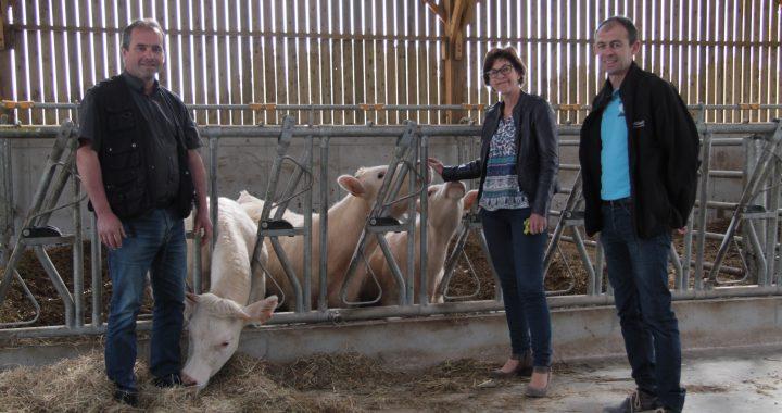 atelier bovin viande